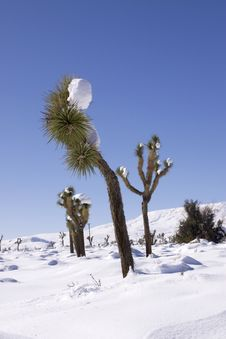 Free Winter In The Desert Royalty Free Stock Photography - 13825837