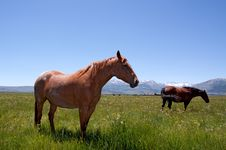 Free Horses Grazing Stock Images - 13825904
