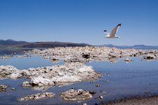 Free Mono Lake Royalty Free Stock Images - 13825909