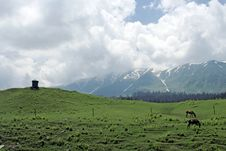 Free Horses On Green Wide Field And Mountain Range. Stock Image - 13826341