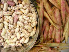 Free White Kidney Beans Eight Royalty Free Stock Image - 13826636