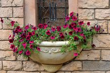 Free Small Parterre On Building External Wall Royalty Free Stock Images - 13827319