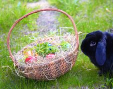 Free Easter Rabbit Stock Photography - 13828232