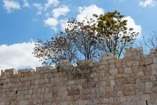 Trees Above Ancient Stone Wall Stock Photos
