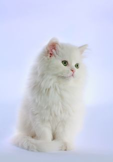 Free Wite Cat With Green Eyes Royalty Free Stock Photos - 13828598