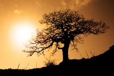 Free Old Tree In Sunset Royalty Free Stock Photography - 13829527