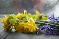 Free Flowers On A Rainy Day Stock Images - 13829964