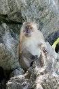 Free Monkey Stock Image - 13831161