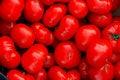 Free Tomatoes Royalty Free Stock Photos - 13837558