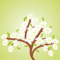 Free Spring Cherry Tree Royalty Free Stock Photography - 13838017