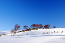 Free Trees In Snow Stock Images - 13830004