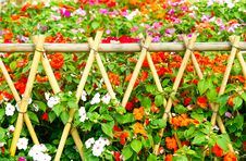 Free Flower-Garden Bed Stock Image - 13831031