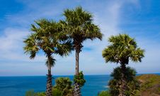 Free Palms Royalty Free Stock Images - 13831079
