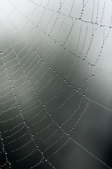 Free Spider Web Stock Photo - 13831580