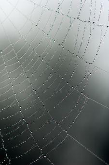 Free Spider Web Stock Photo - 13831580