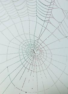 Free Spider Web Royalty Free Stock Photos - 13831598