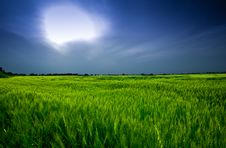 Free Wheat Field Royalty Free Stock Photo - 13832015