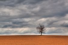 Free Lonely Tree Royalty Free Stock Photography - 13832177