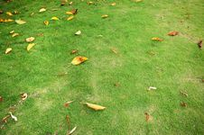 Free The Green Lawn Stock Image - 13833571