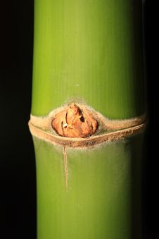 Free Bamboo Stock Photos - 13835373