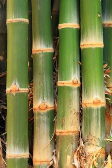 Free Bamboos Stock Images - 13835434