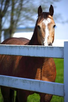 Free Horse Behind A Fence. Royalty Free Stock Photos - 13836918