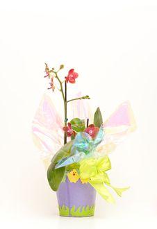 Spring Childrens Flower Pot Stock Images