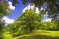 Free Beautiful Tree Stock Photo - 13837950