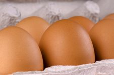 Free Eggs In Box Royalty Free Stock Images - 13838829