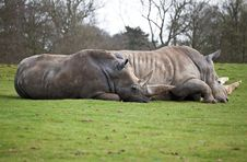 Free A Couple Of White Rhinos Lying In A Field Royalty Free Stock Photos - 13838878