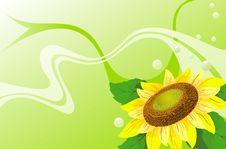 Free Sunflowers Stock Image - 13839031