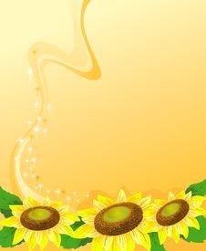 Free Sunflowers Stock Photo - 13839040