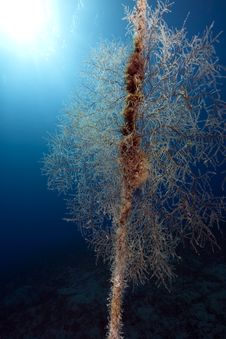 Free Seafan On A Anchor Line Stock Photo - 13839110