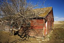 Old Barn Dried Tree Wide Angle Closeup Royalty Free Stock Photos