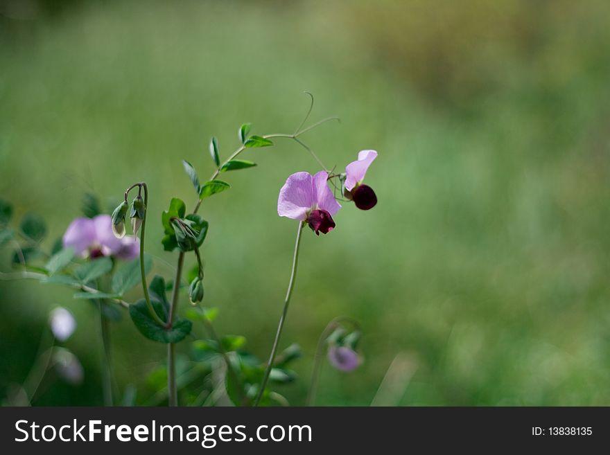 Flowers from botanic garden