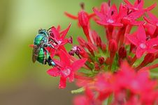 Green Insect On Flowers Stock Photo
