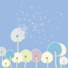 Free Abstract Dandelions Stock Photography - 13841892