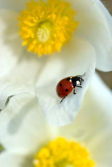 Free Ladybird Stock Photography - 13842152