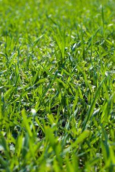 Free Green Field Stock Image - 13842181