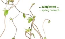 Spring Flora Royalty Free Stock Photography