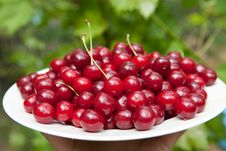 Free Tasty Cherries Stock Images - 13844814