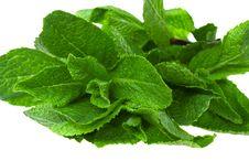 Free Fresh Green Mint Stock Image - 13845411