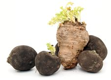Celeriac And Black Radishes Royalty Free Stock Photo