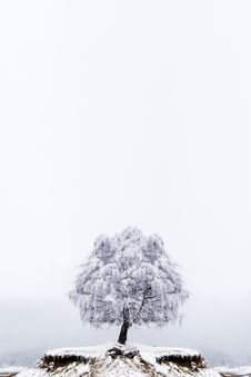 Free Winter Solitude Tree Royalty Free Stock Photos - 13848218