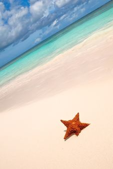 Free Red Starfish On A Sand Beach Royalty Free Stock Images - 13848739