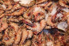 Free Fresh Shrimps Closeup Royalty Free Stock Photos - 13849588