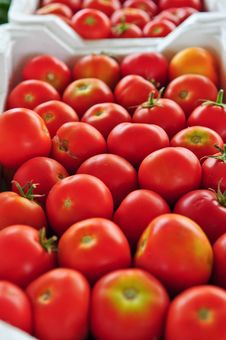 Free Tomatoes At The Market Stock Images - 13849644