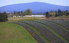 Free Landscape & Tree Farming. Royalty Free Stock Photo - 13849735