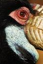Free A Bird S Eye Stock Photo - 13851020
