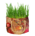 Free Green Grass In The Gift Bag Stock Photos - 13852153